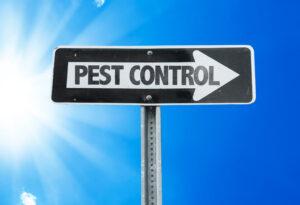 pest control - ant extermination